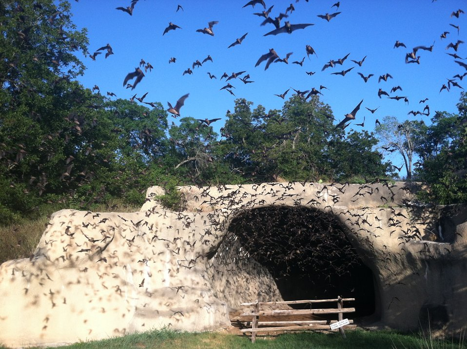Bats emerging from Chiroptorium