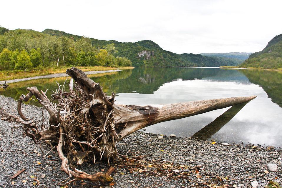 Driftwood on Uganik Lake