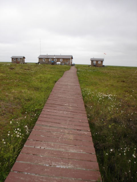Boardwalk at Kanaryarmiut Field Station