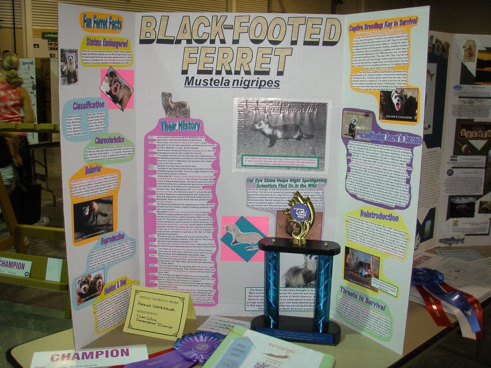 Hannah's Project
