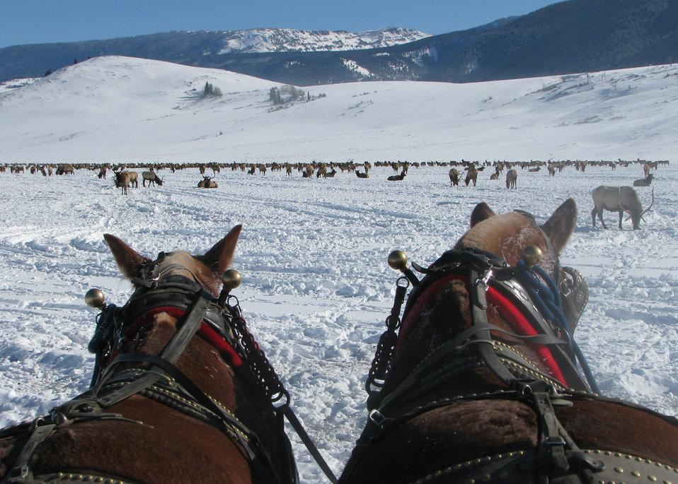 Horse-drawn Ride
