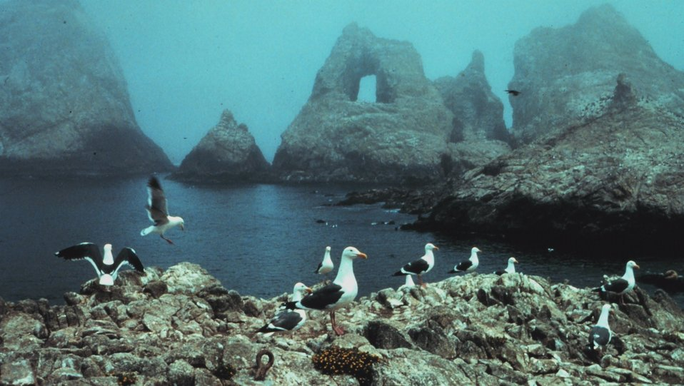 A foggy day in the Gulf of the Farallones National Marine Sanctuary