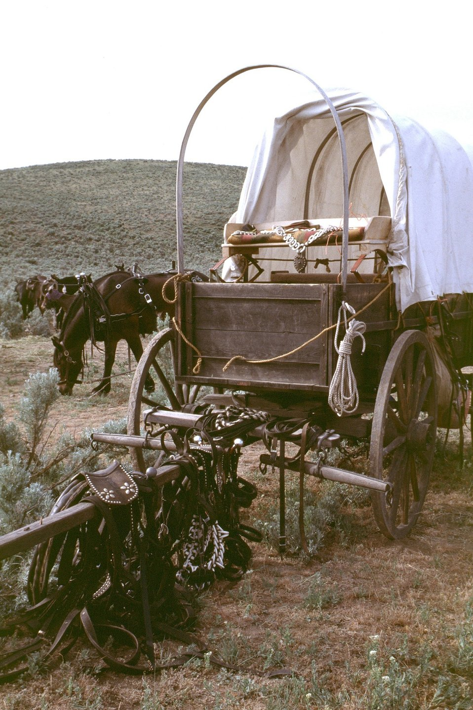 NHOTIC 10th Anniversary, wagon train reenactment. Covered wagon and grazing horses on the Oregon Trail.
