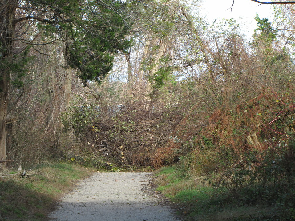 Debris blocking beach trail at Elizabeth A. Morton National Wildlife Refuge