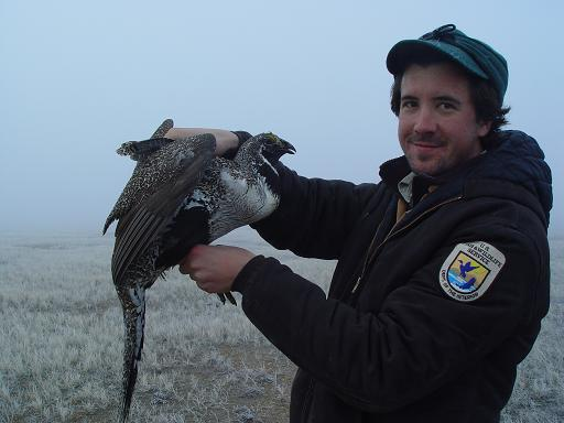 Helping Sage Grouse