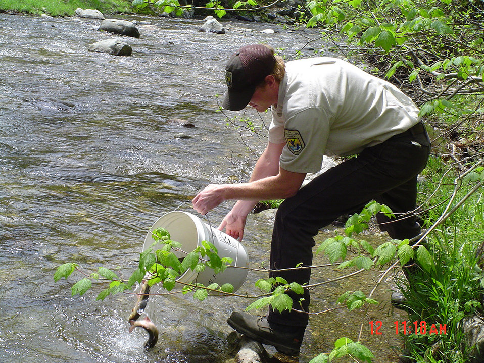 Brook trout stocking