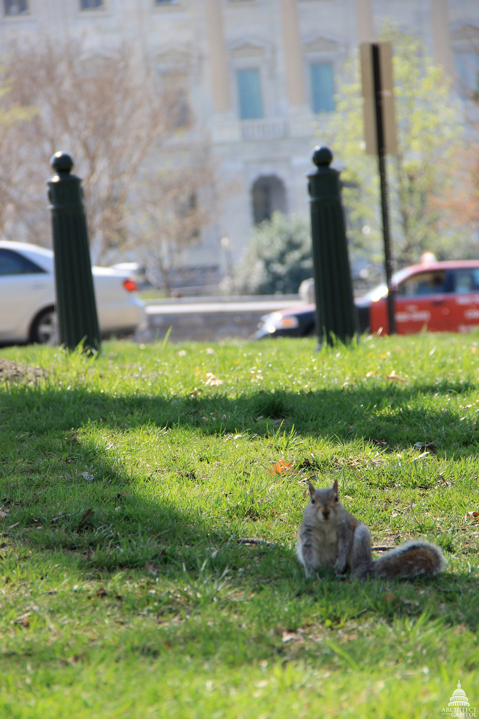 Squirrel in the Senate Parks