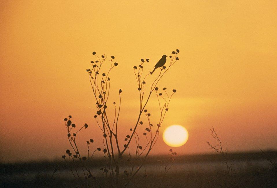 tewaukon sunset