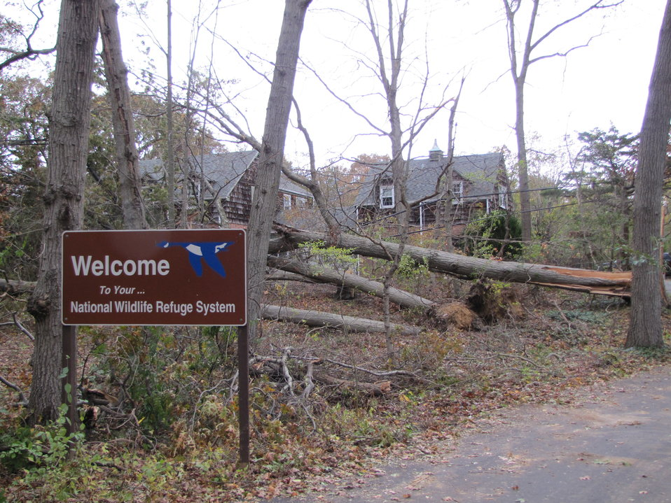 Tree and power line damage at Target Rock National Wildlife Refuge (NY)