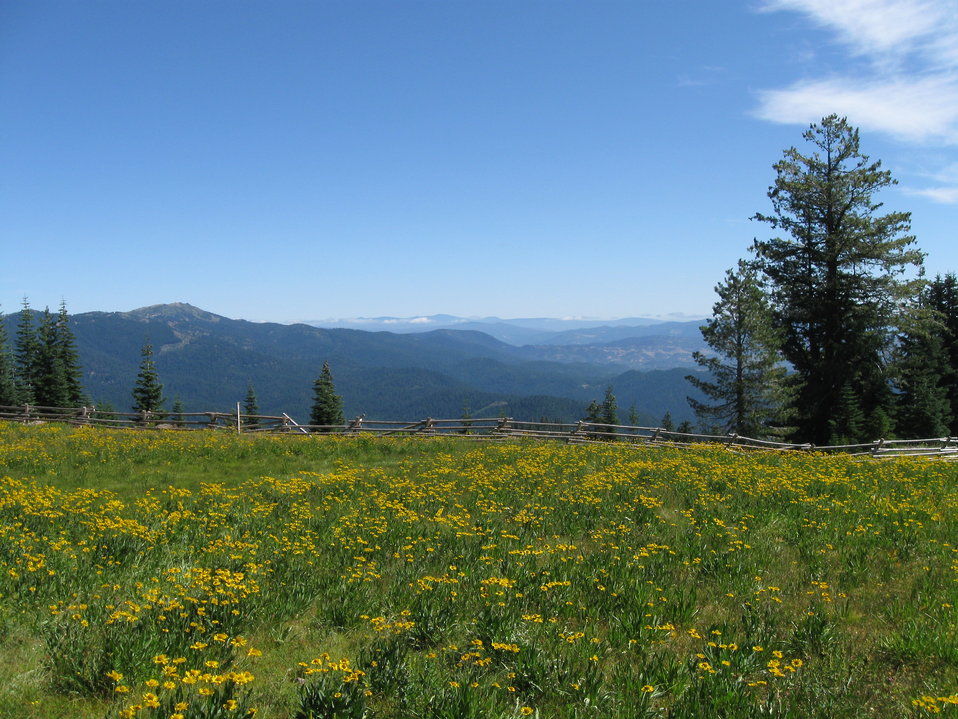 Alpine Wet Meadow in the Klamath Mountains