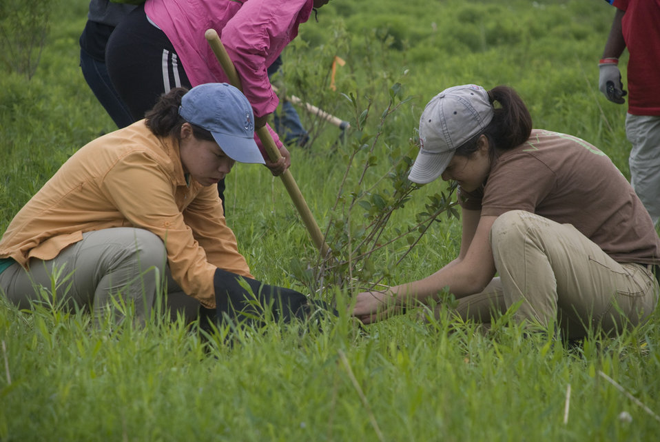 CIP students planting trees
