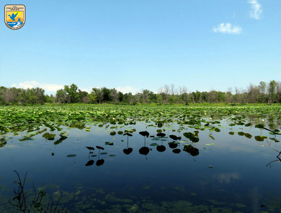 Blackwater wetland - Northeast Region
