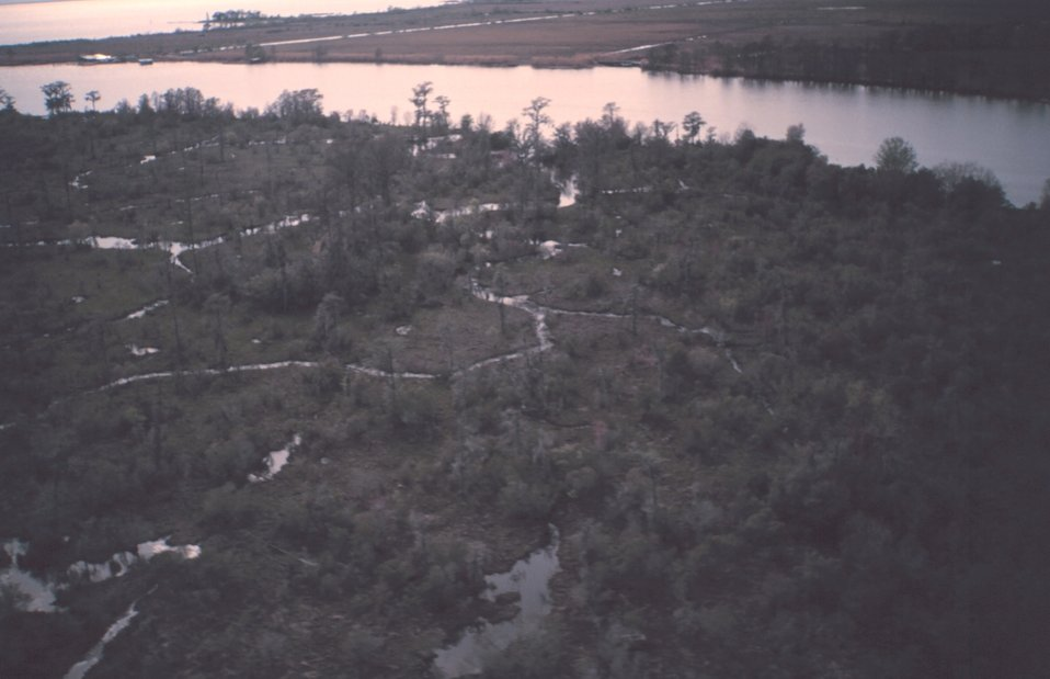 Cypress marsh at the edge of Lake Ponchartrain as seen from the air.