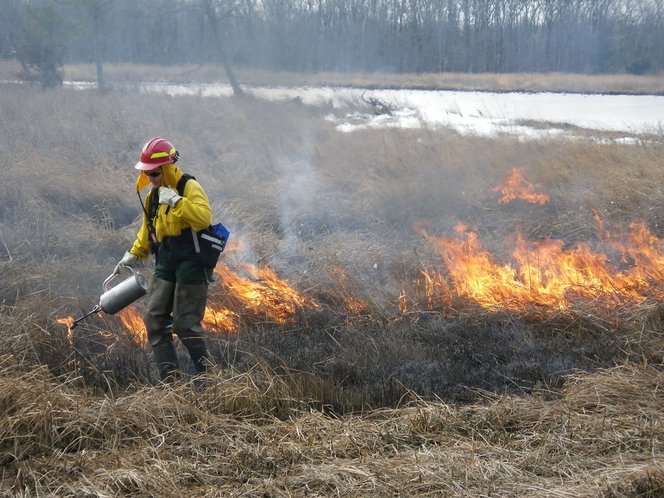 Fire biologist lights controlled burn