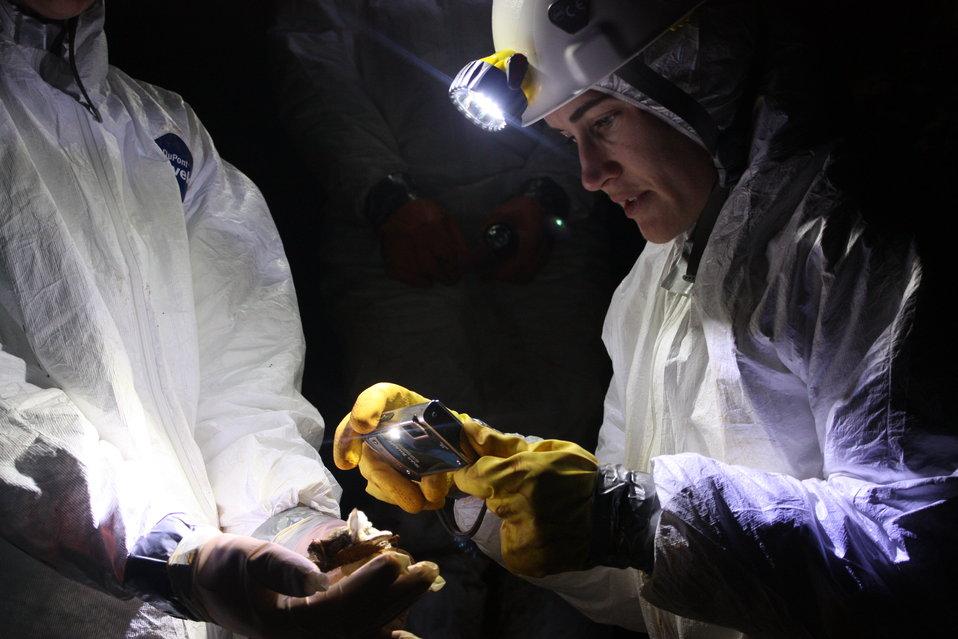 NCWRC biologist Gabrielle Graeter photographing dead bat