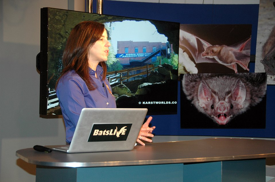 Ann Froschauer talks about threats to bats