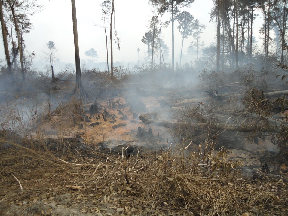 Smoldering peat fire