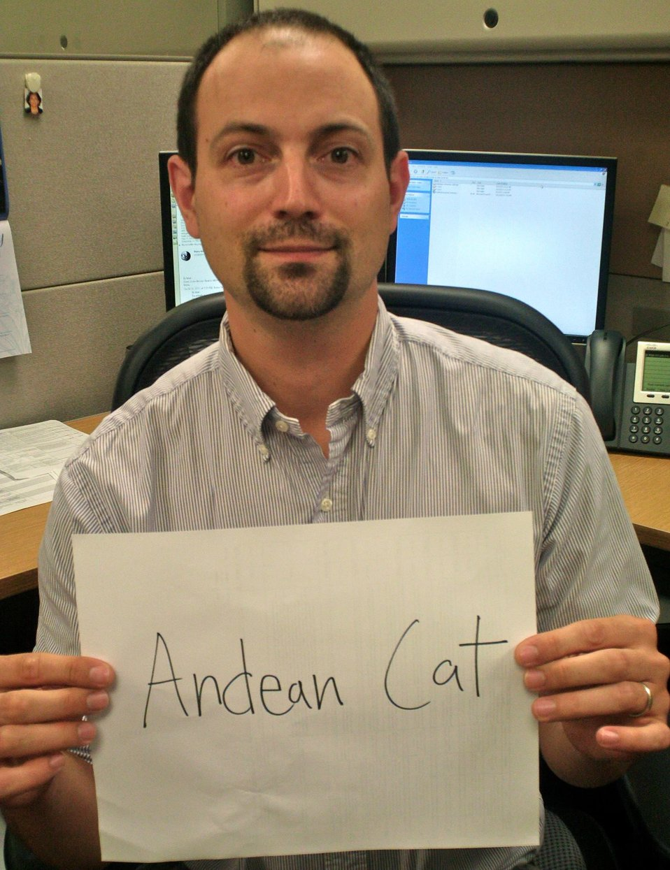 Matt Muir, 'Andean Cat,' Credit: USFWS