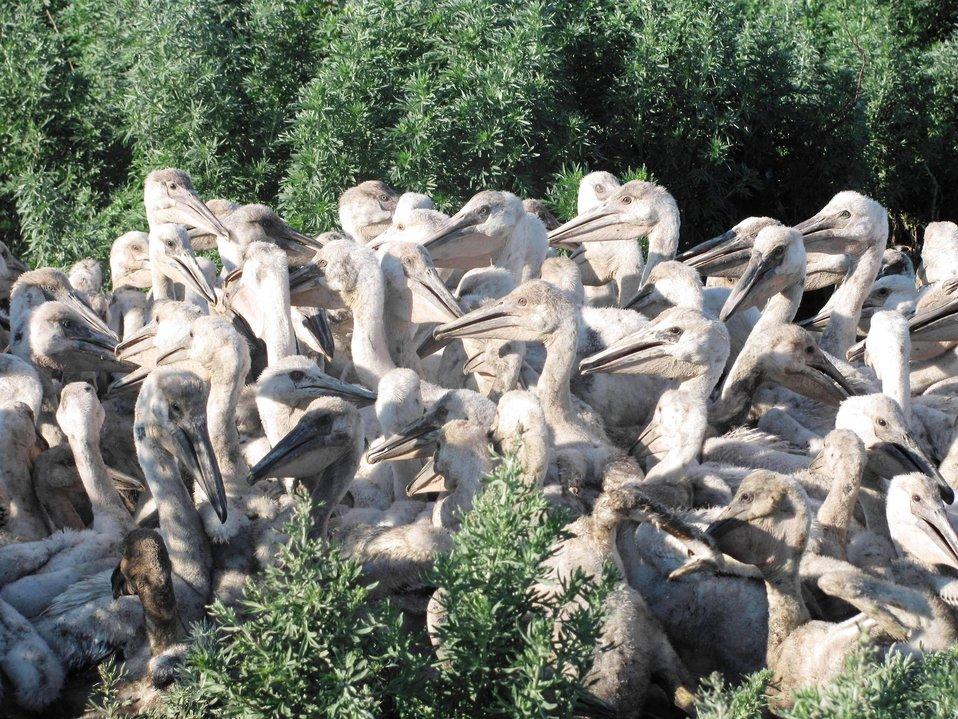 Pelican Creche
