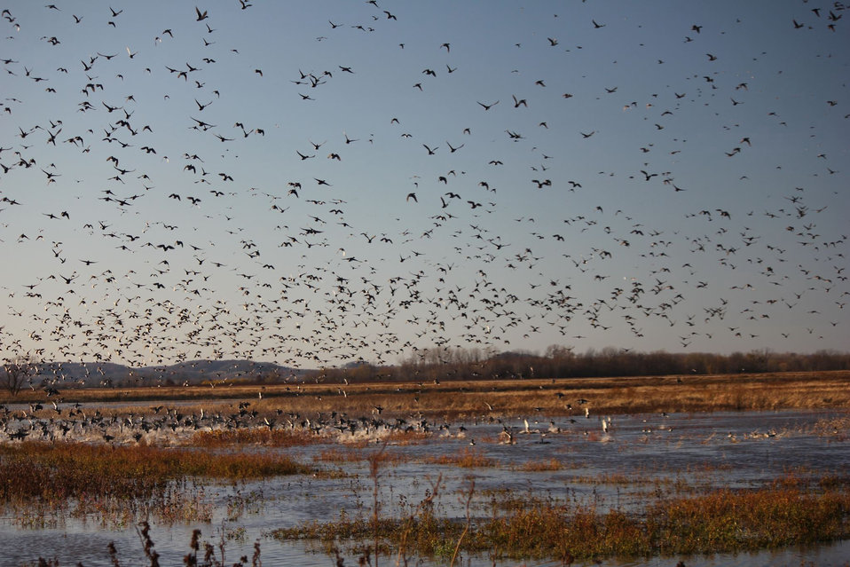 fall migration at Clarence Cannon NWR