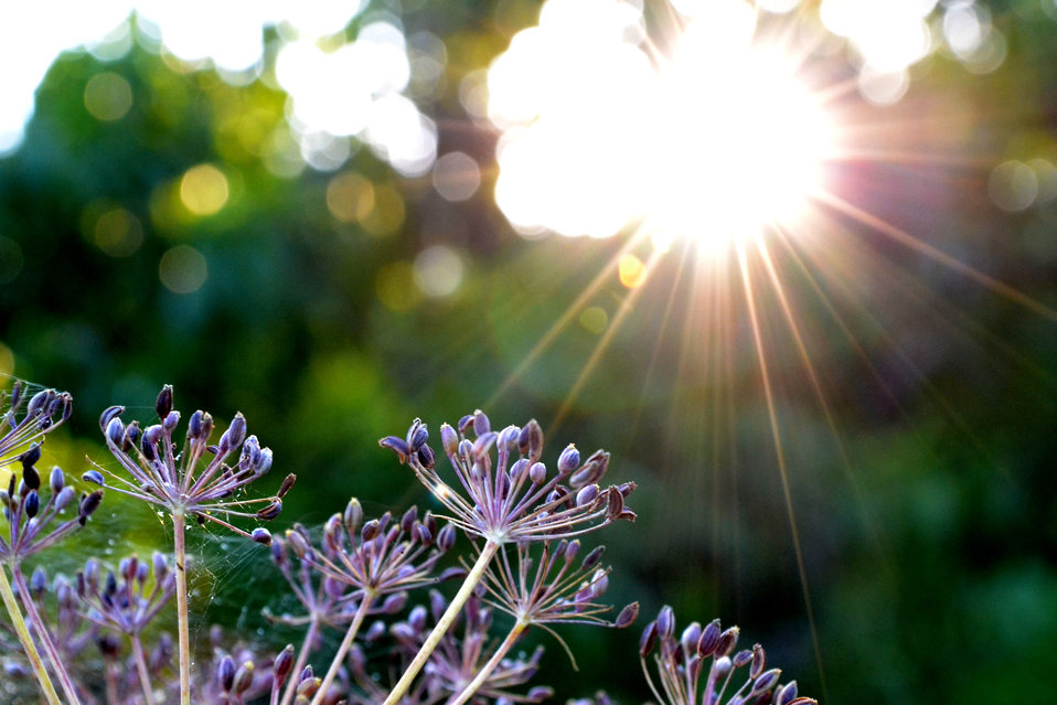 Sun and nature