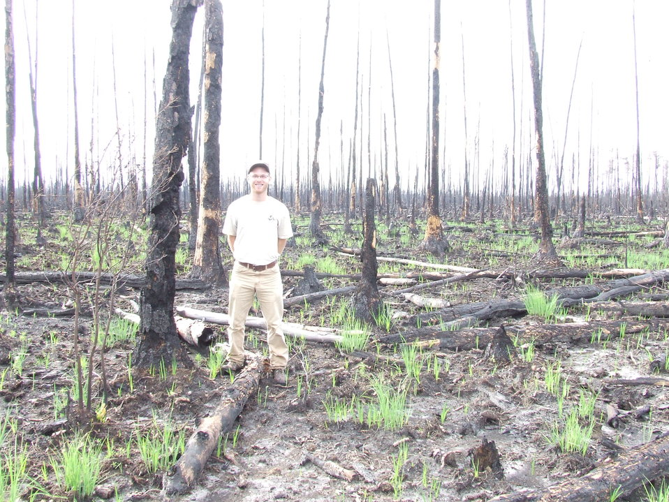 regrowth after fire, Okefenokee National Wildlife Refuge, GA