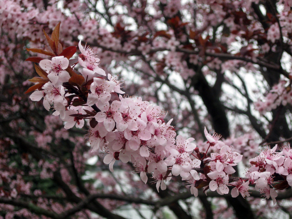 Photo of the Week - Spring blossoms (MA)