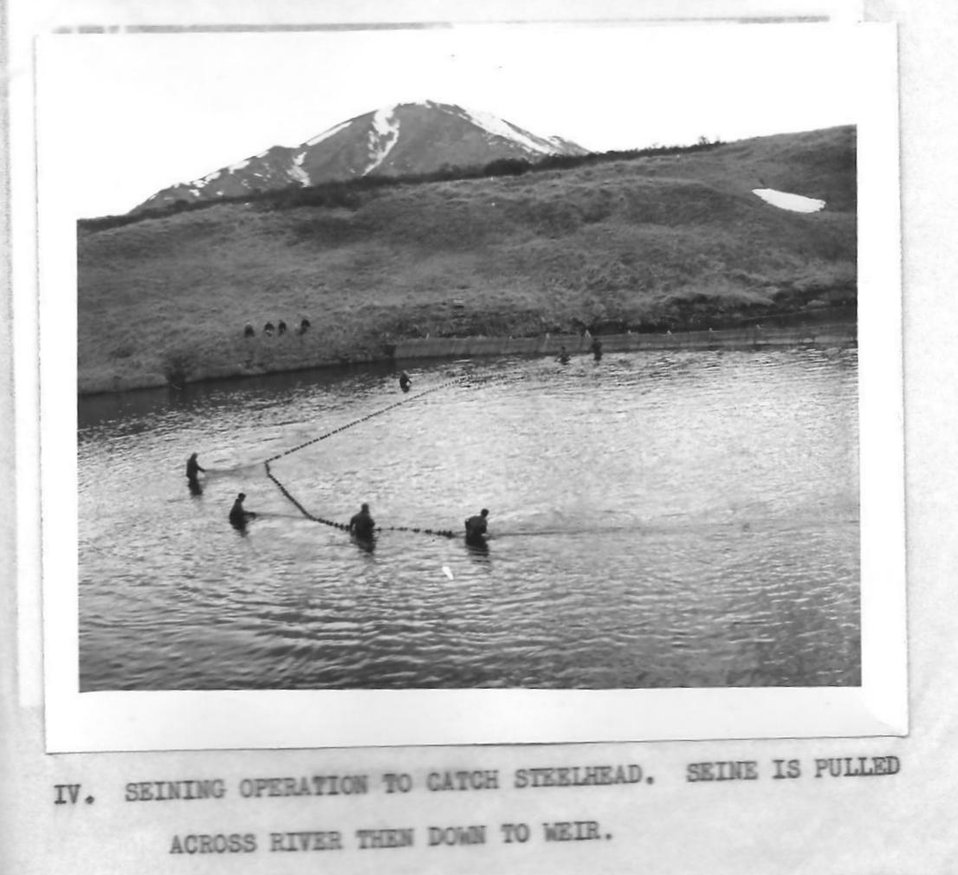 (1954) Seining for Steelhead