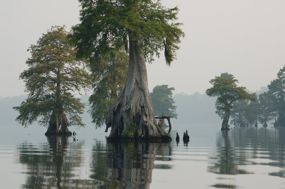 Photo of the Week - Great Dismal Swamp National Wildlife Refuge (VA)
