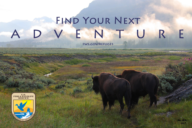 Find Your Next Adventure