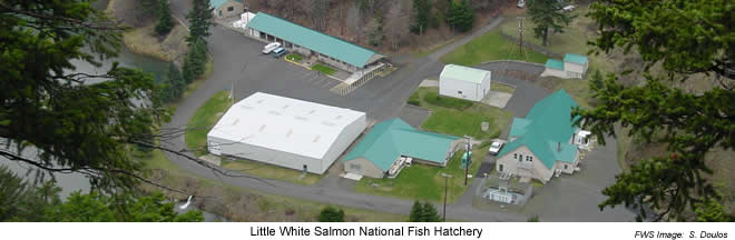 Little White Salmon National Fish Hatchery
