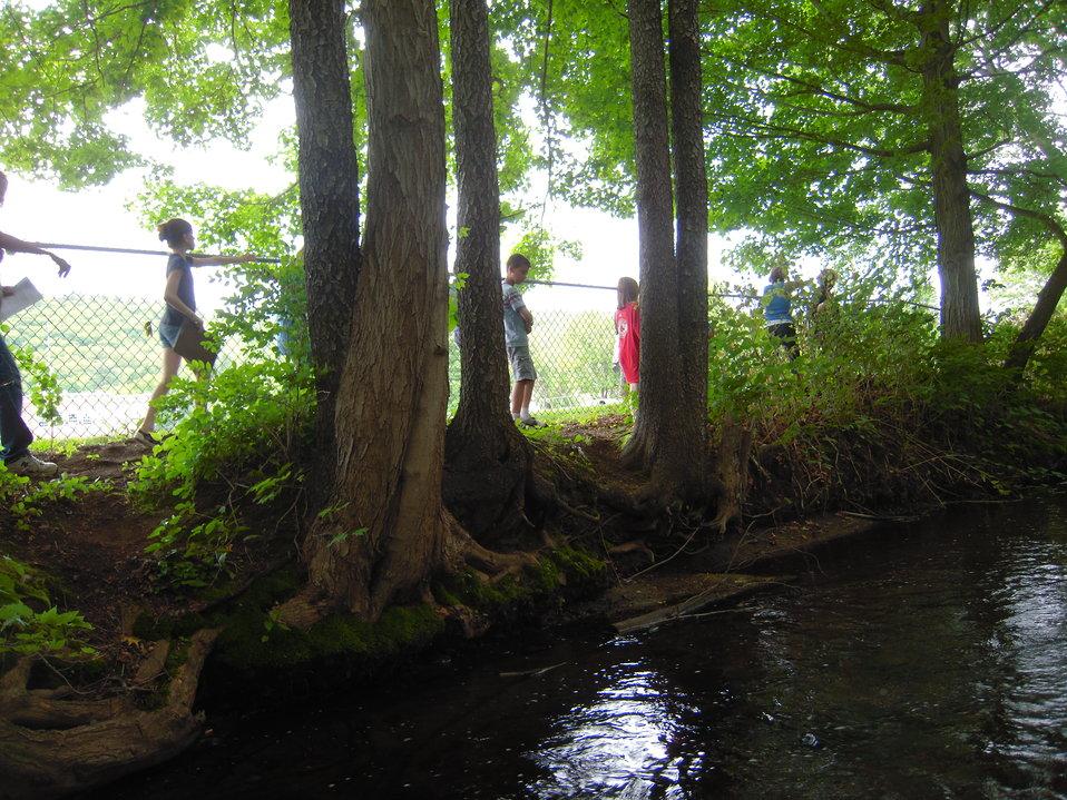 Walking along stream studying plants