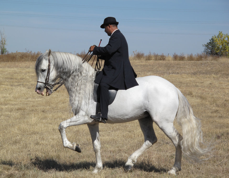 Dancing Horses