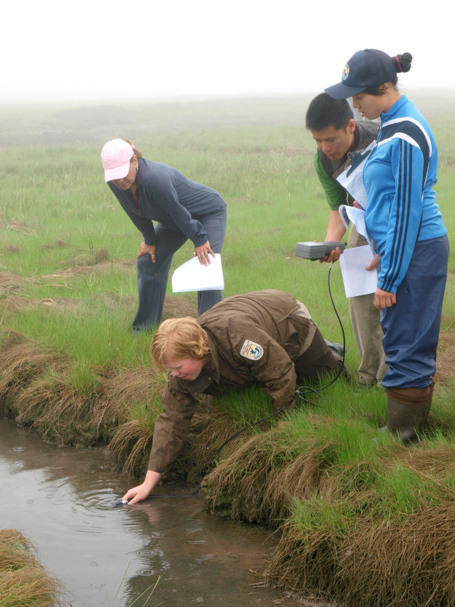 Testing salt marsh water quality with interns