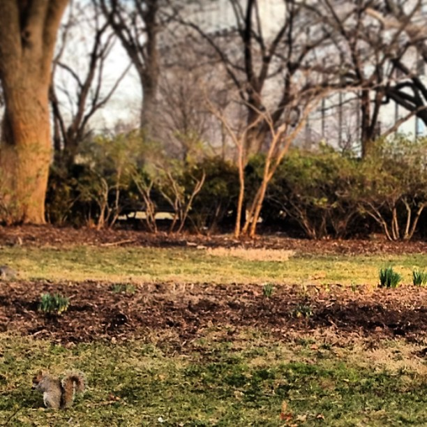 Hints of spring on Capitol grounds on a near 70 degree day in DC