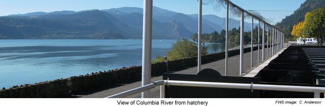 View of Columbia River from Spring Creek NFH