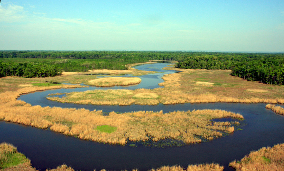 Aerial view of forest, river and marsh