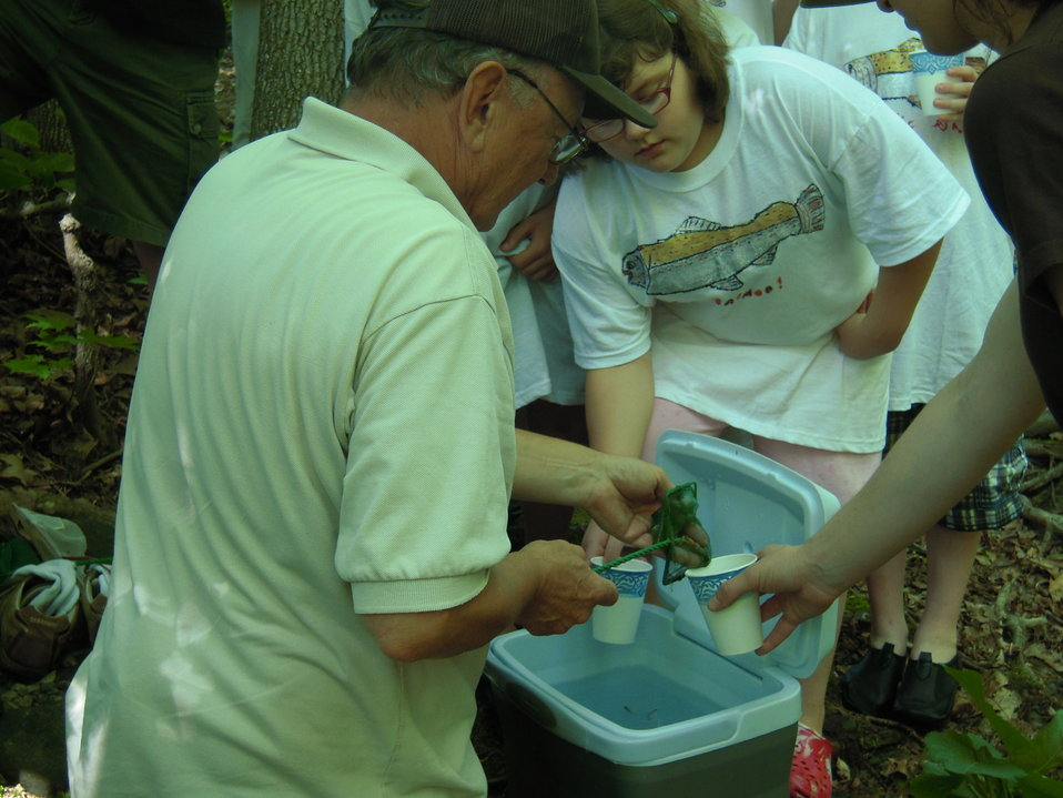 Distributing salmon fry for release