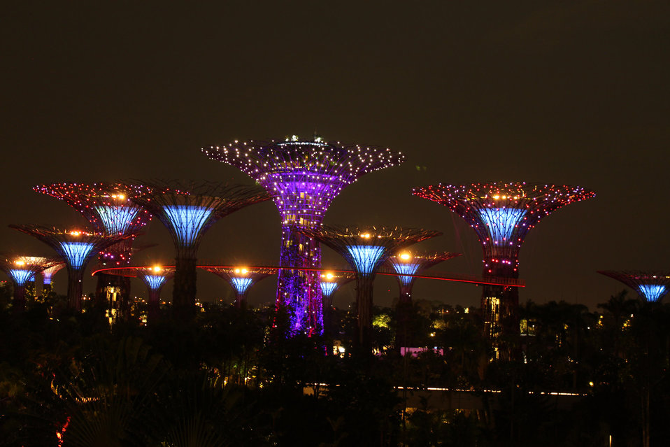 Garden by the bay night view