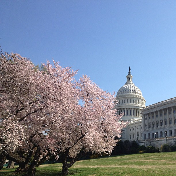 Perfect spring day on Capitol Hill.