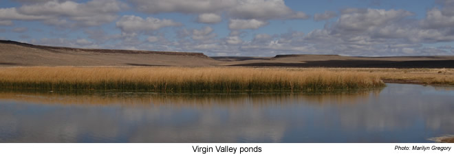 Virgin Valley ponds - Sheldon NWR