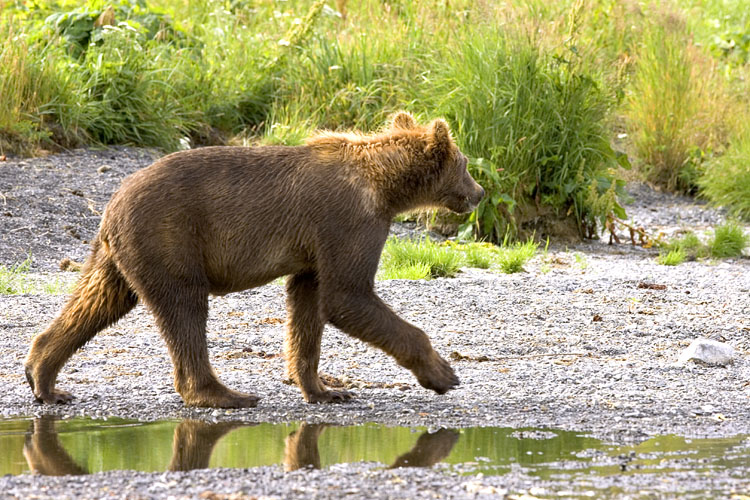 Wildlife of Kodiak Refuge