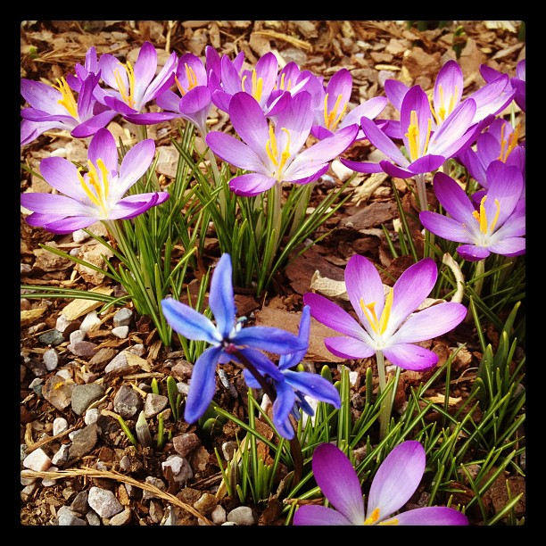 Spring at the Capitol grounds.