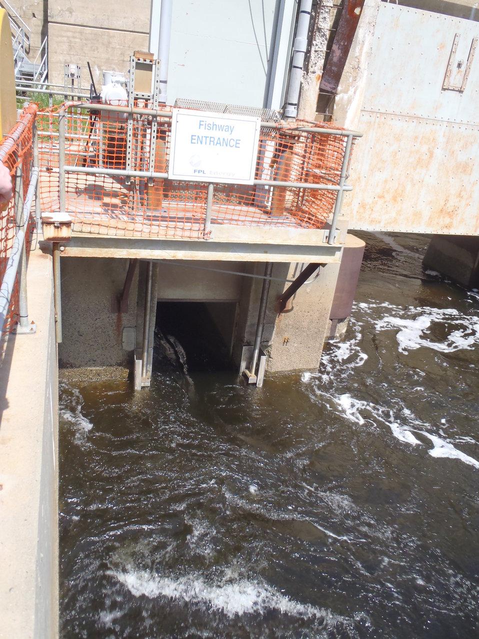 Fish lift entrance on the Saco River