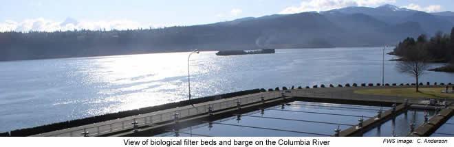 Biological filter beds - Spring Creek NFH
