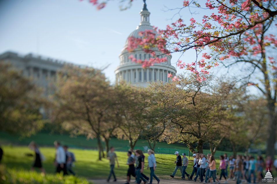 Spring at the Capitol