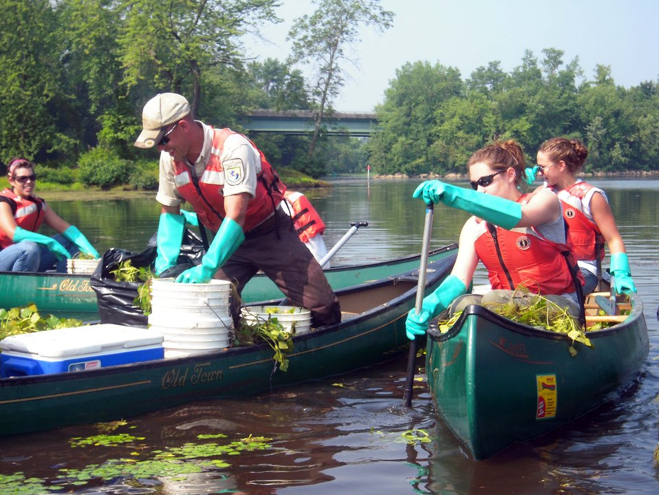 YCC crew removing water chestnut