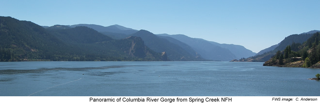 Panoramic of Columbia River Gorge - Spring Creek NFH
