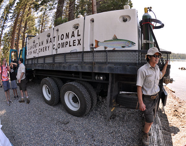Stocking Fallen Leaf lake with Lahontan cutthroat trout