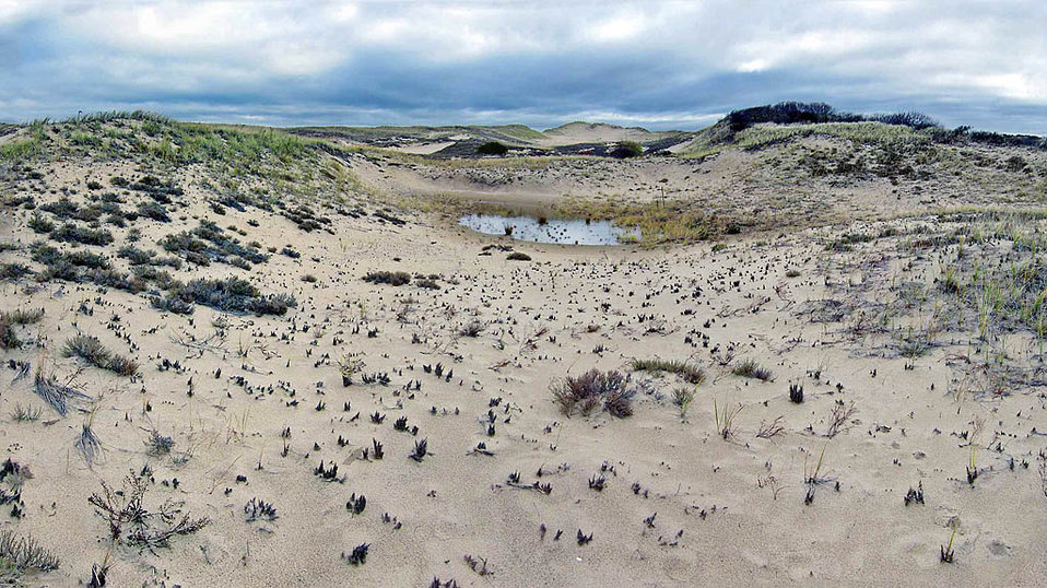 Dunes at Parker River National Wildlife Refuge
